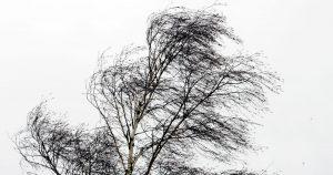 На Тверскую область надвигается шторм