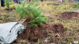В Твери посадили «Лес Победы» в память о лётчике