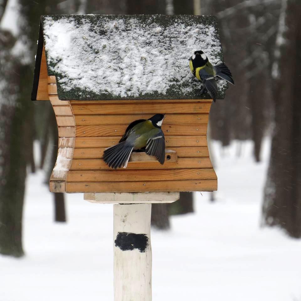 Открыток, картинки кормушки для птиц