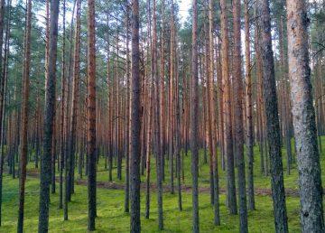В Тверской области увеличат площадь земель лесного фонда