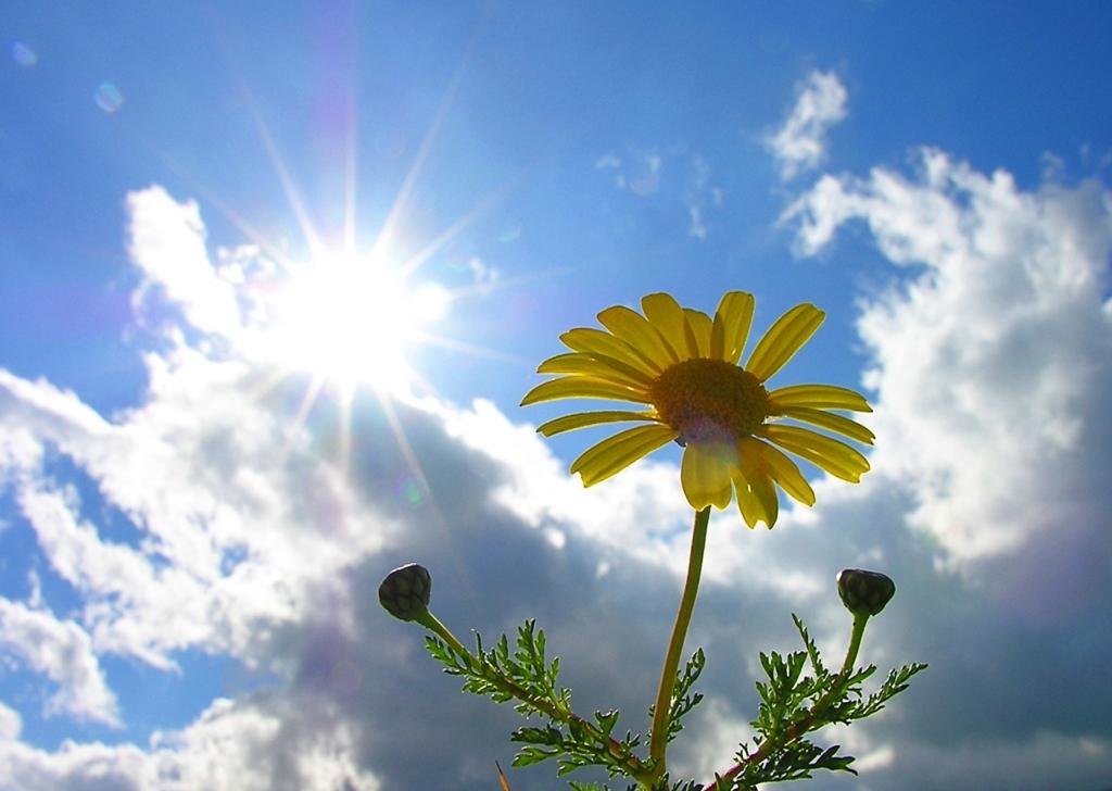 Летнее тепло придёт в Тверскую область на этой неделе