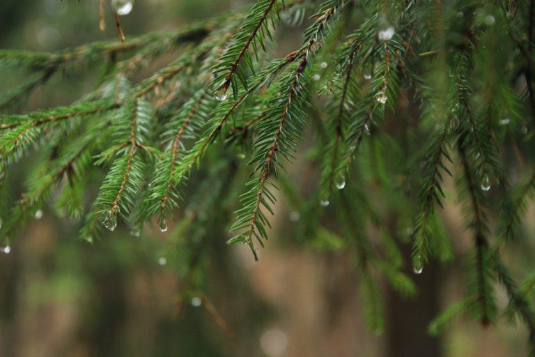 В Тверской области  продолжатся дожди