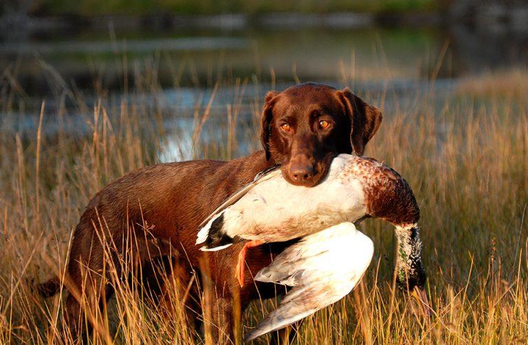 В Тверской области запретили охоту на дичь