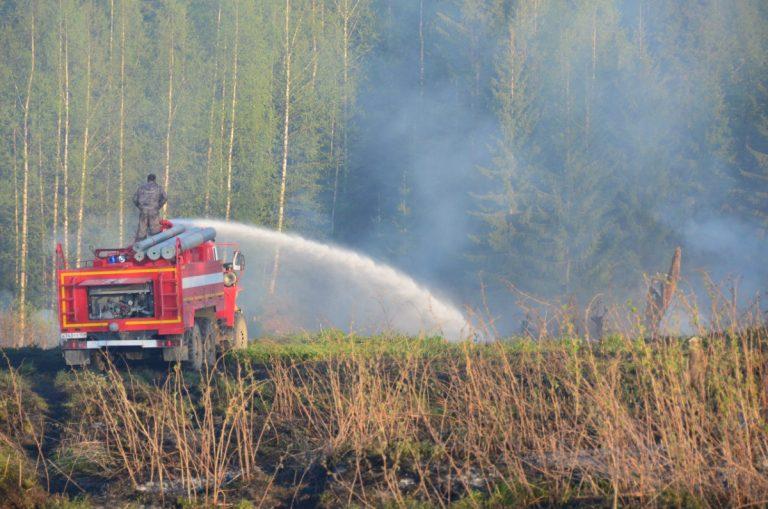 В лесу под Тверью произошел пожар
