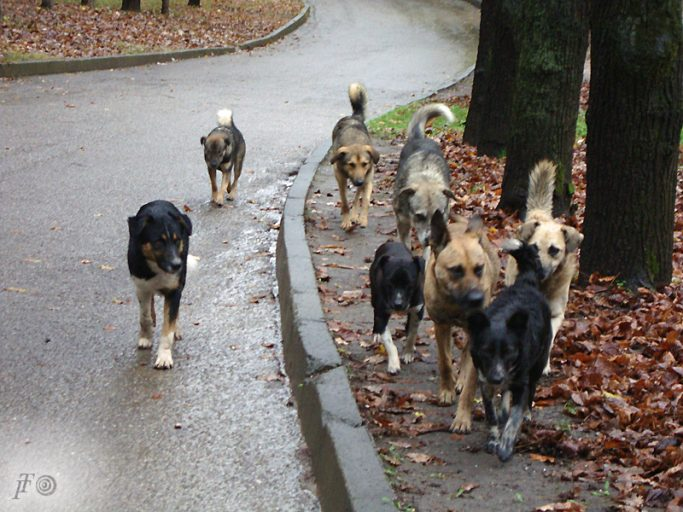 В Тверской области планируют ввести гуманную систему обращения с безнадзорными животными