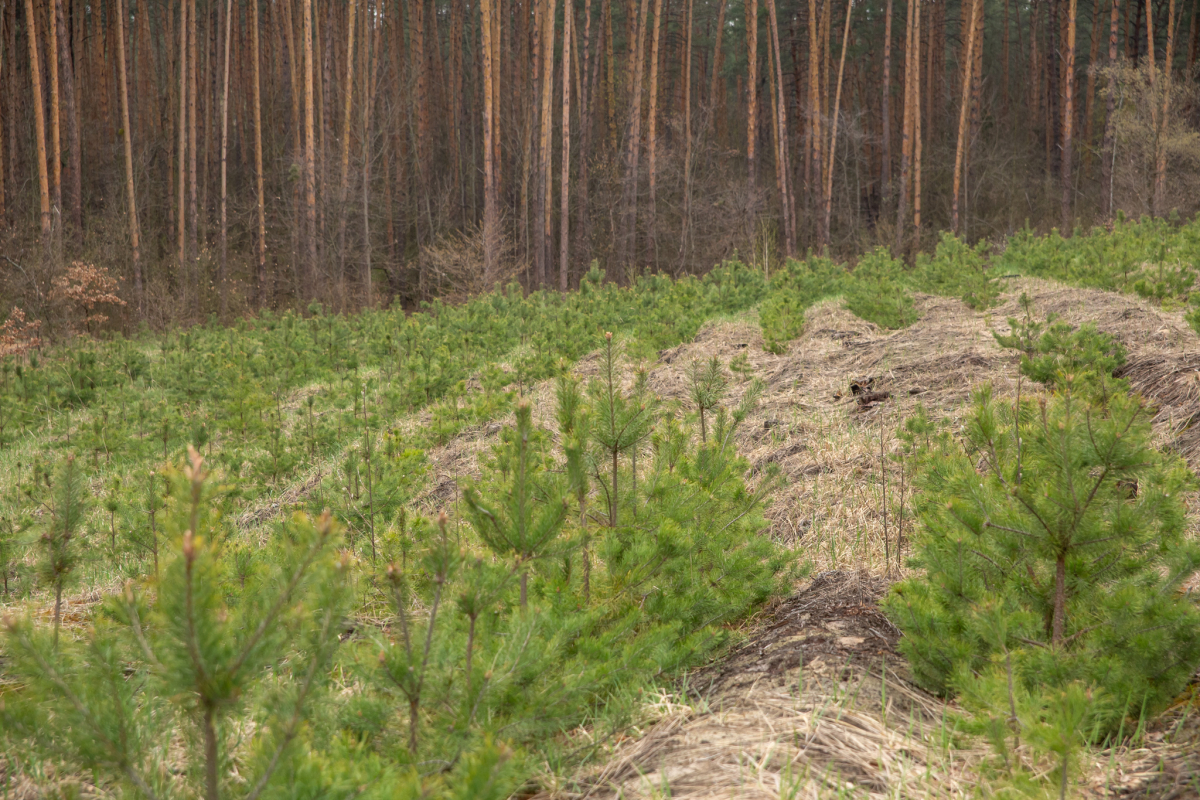 В Тверской области закупят технику для восстановления и защиты лесов