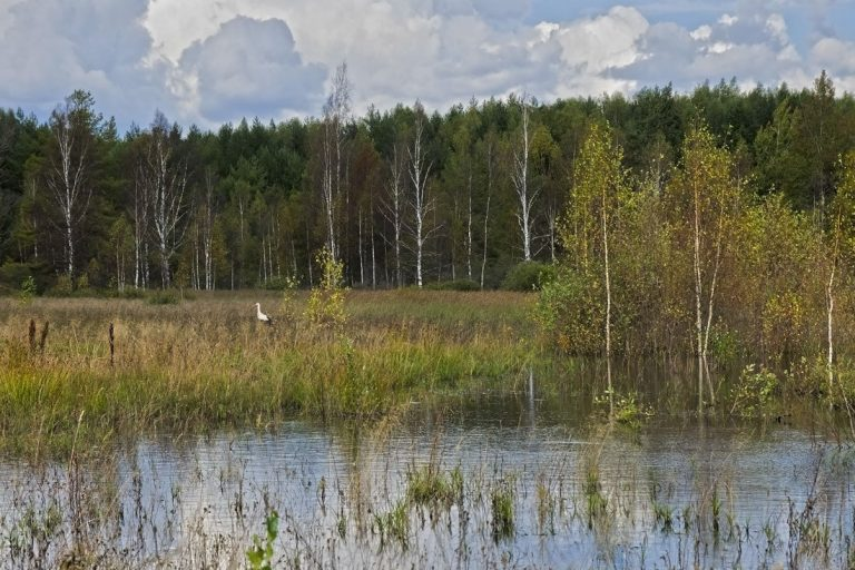 В Тверской области утверждены границы трех особо охраняемых территорий