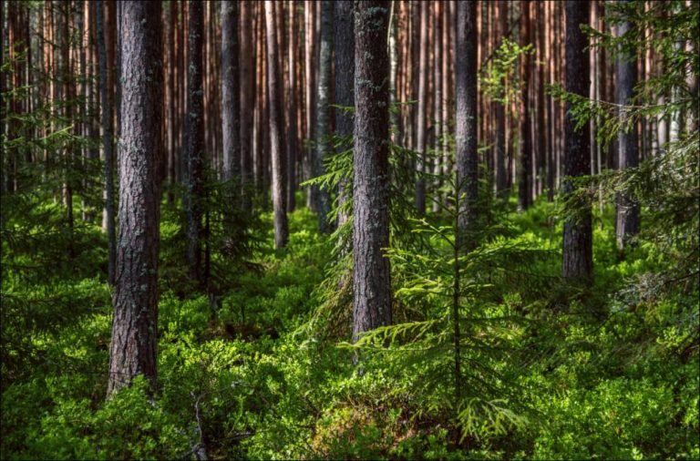 Земли запаса в Тверской области переведут в земли Гослесфонда
