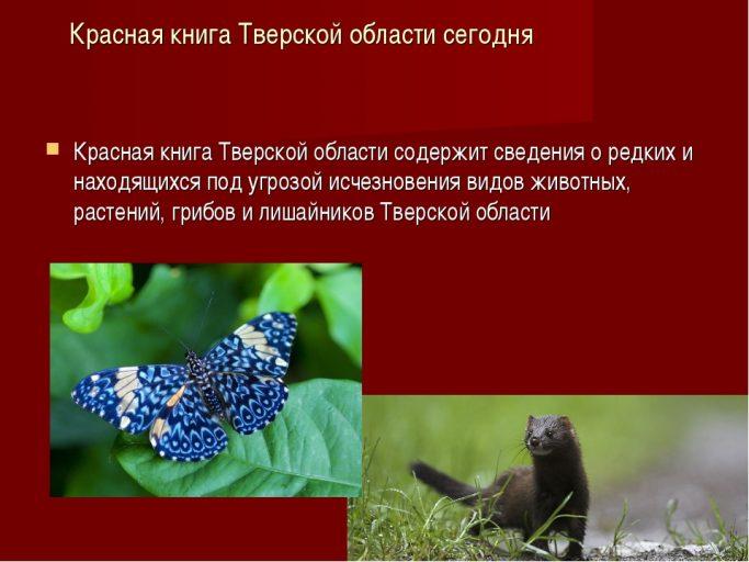 В Тверской области пройдёт инвентаризация Красной книги