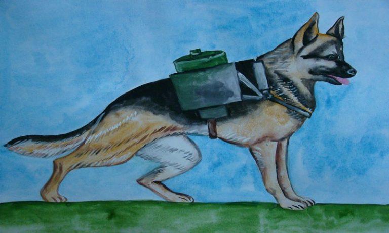 Тверские школьники участвуют в конкурсе «Портрет фронтовой собаки»