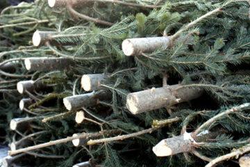 Житель Тверской области нарубил леса на 7 лет