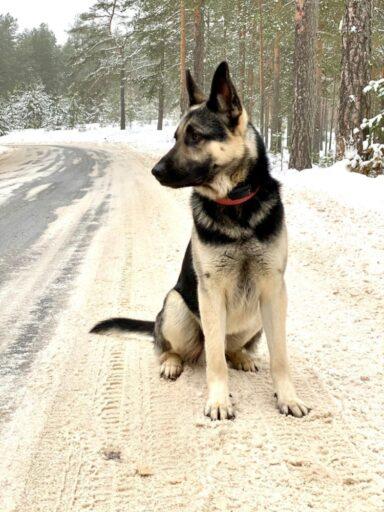 В Калининском районе Тверской области просят помочь найти собаку за вознаграждение