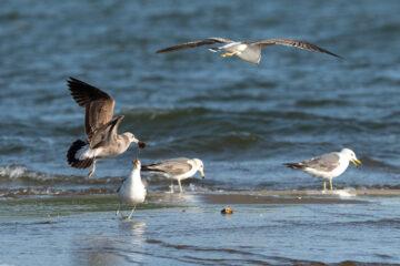 В центре Твери целой колонии птиц угрожает опасность