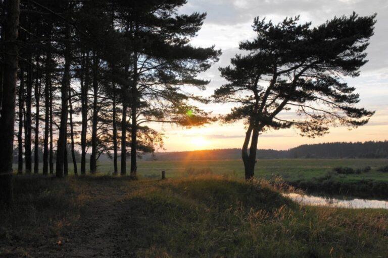 Жители деревни под Тверью пожаловались на вырубку леса