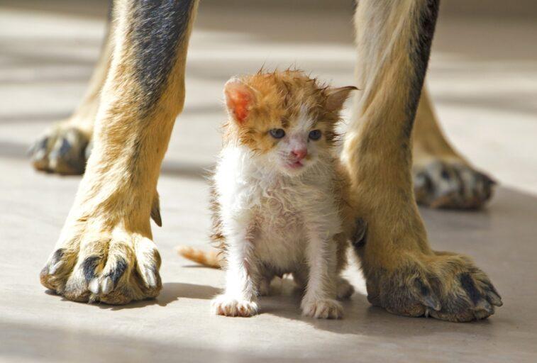 Защитники животных из Твери выиграли президентский грант