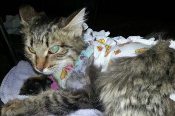 В Тверской области живодеры расстреляли котов