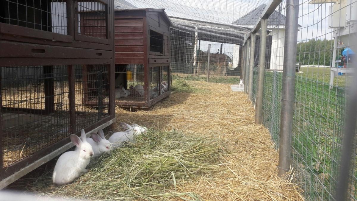 В Тверской области помогут кролиководам